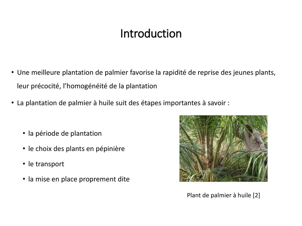 production des r gimes de palmier huile ppt t l charger. Black Bedroom Furniture Sets. Home Design Ideas